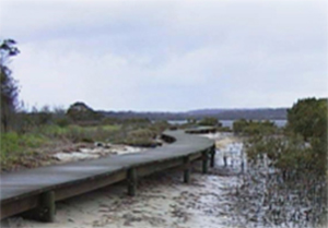 Boardwalk along estuary.