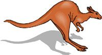 Image of kangaroo.