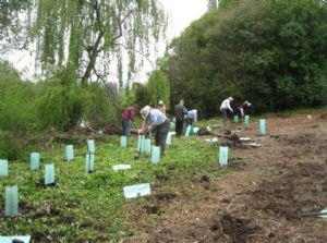 Tree planting at Spenco Lagoon in Bega, funded by earlier Community Environment Grants