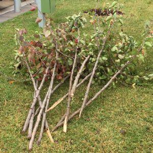 Vandalised trees from Littleton Gardens.