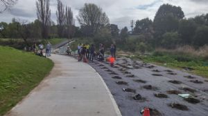 Community working together on the East Street cycleway planting project in Bega.