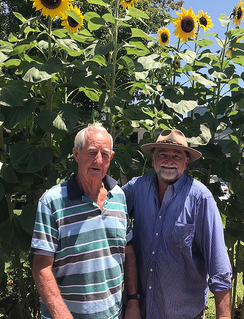 Marshall Campbell and Geoffrey Grigg are volunteer gardeners, who keep Bega's Littleton Gardens blooming, pictured here in front of sunflowers in bloom.