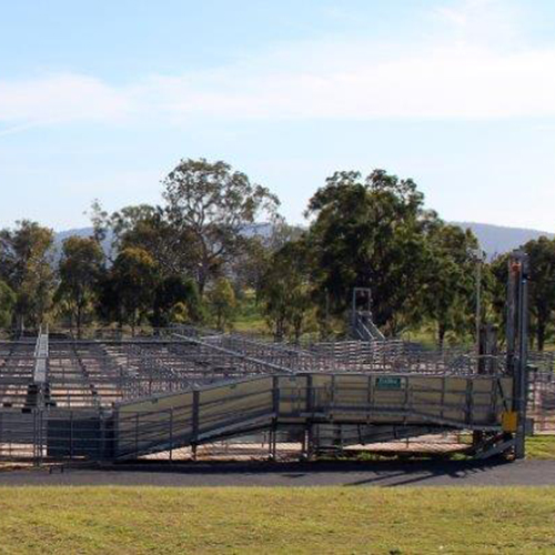 Bega saleyards