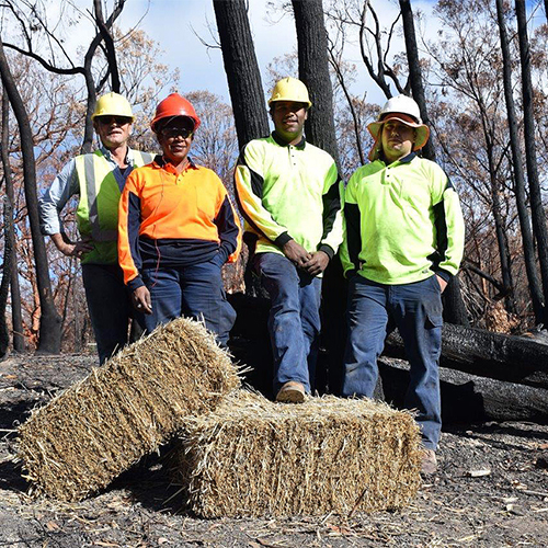 The local Koori Work Crew is playing a vital role in the stabilisation of natural areas around Tathra.