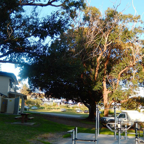 Trees overhanging the outdoor gym in Bermagui.