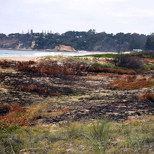 A sectionof the dune network impacted by the fires in Tathra.