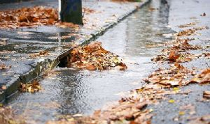 Natural pollutants like leaves and rubbish in drains.