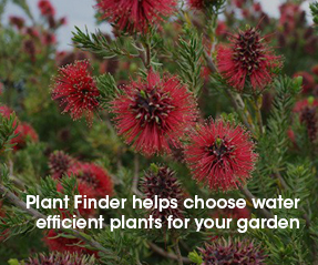 Click the image to use the plant finder to help select water efficient plants for your garden.